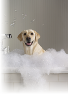 Services furry friends professional full service grooming dog self wash solutioingenieria Gallery